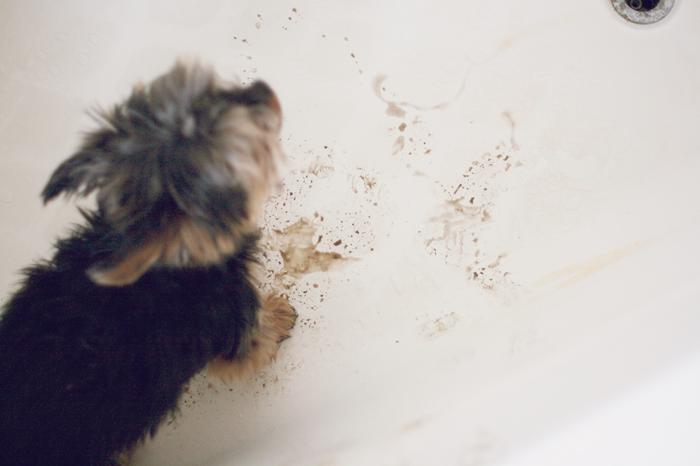 Archie-Bath2